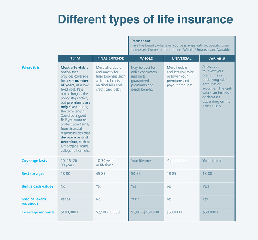 life insurance type infographic