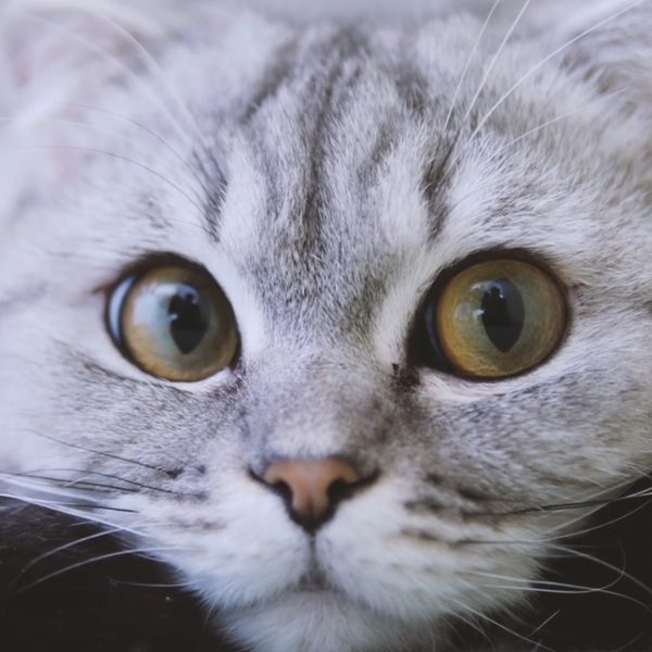 close up of a cat