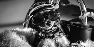 motorcycling with dogs