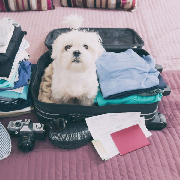 take your pet on vacation