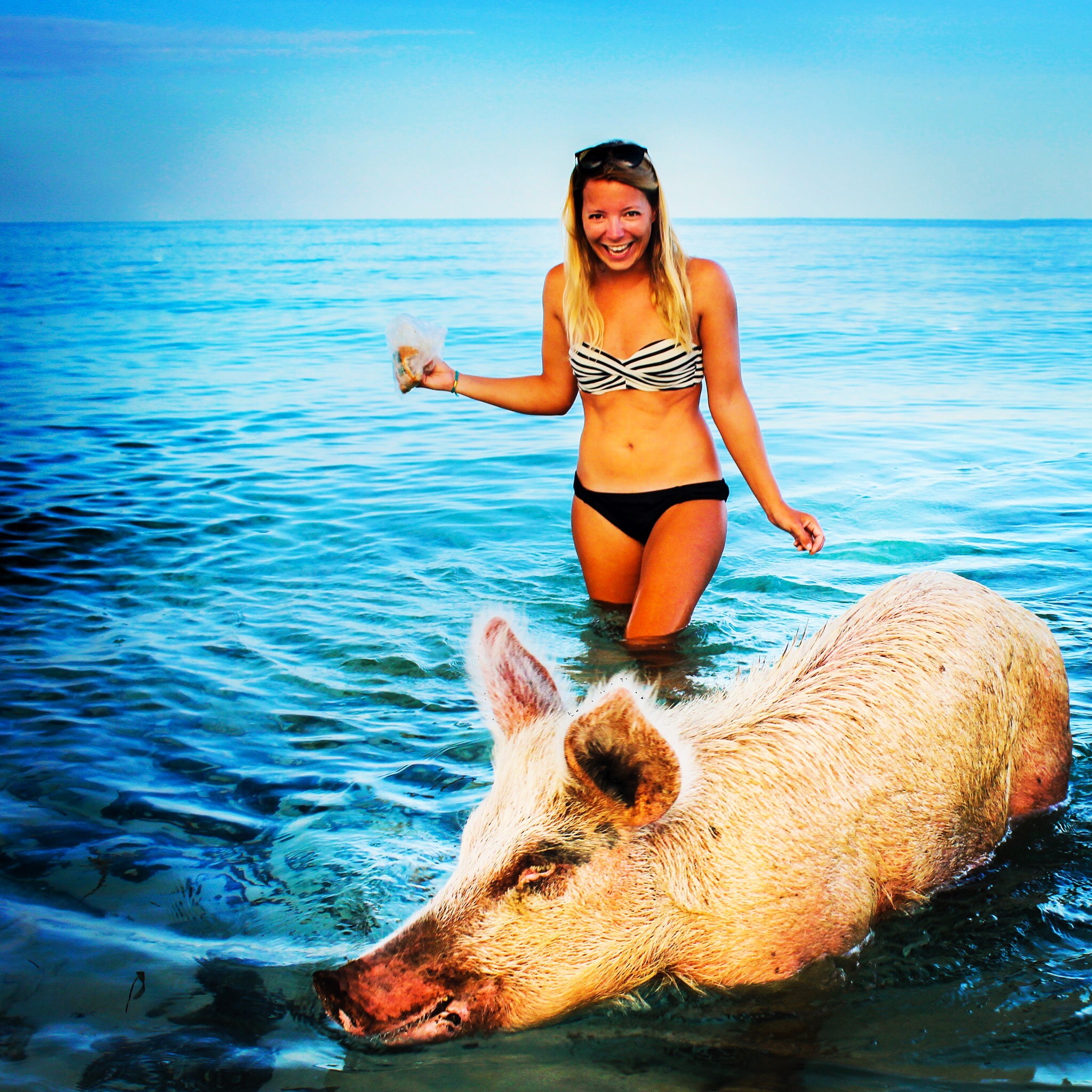 woman in water with pig in the Bahamas