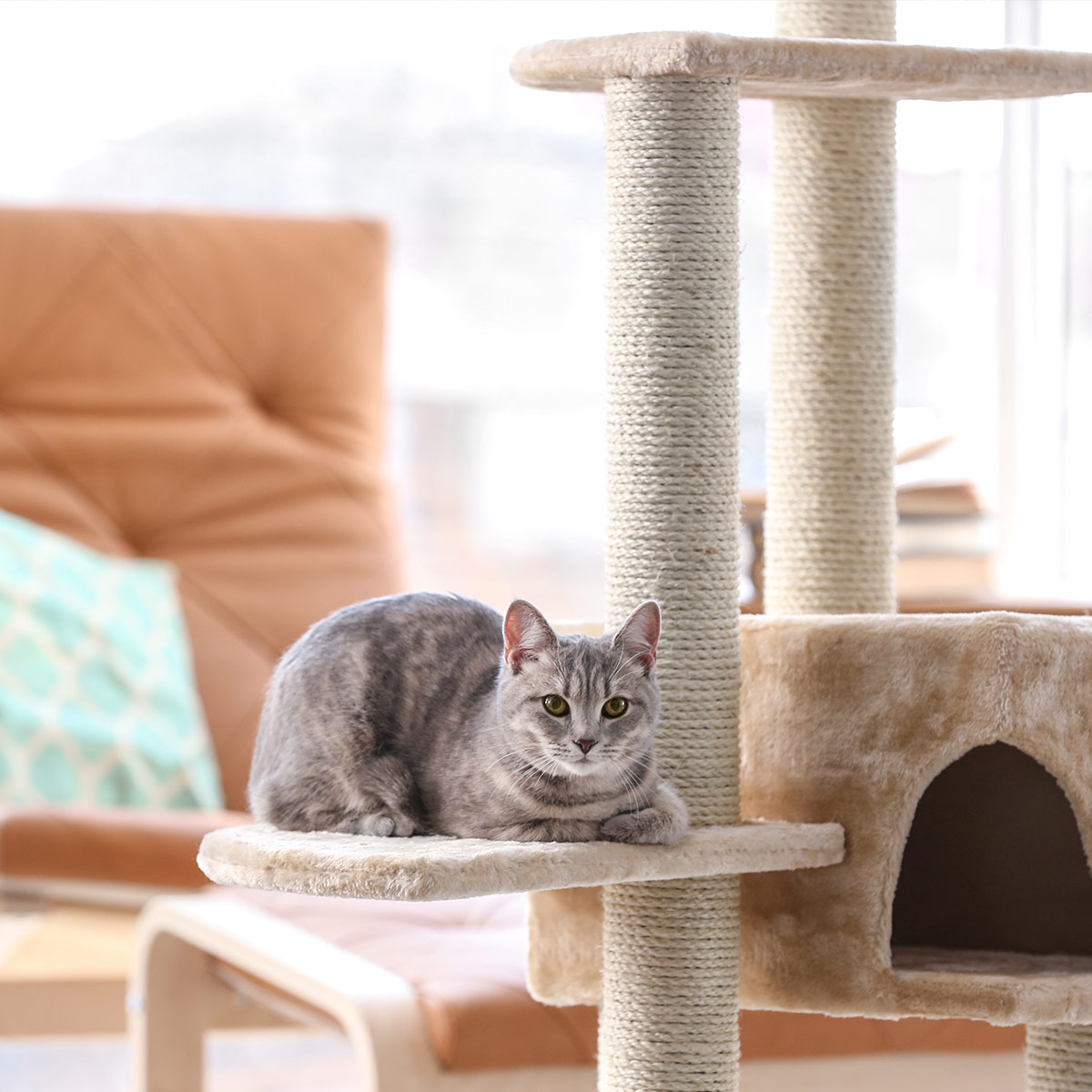 cat sitting on a scratching post