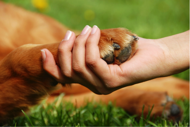 dogs paw in human hand