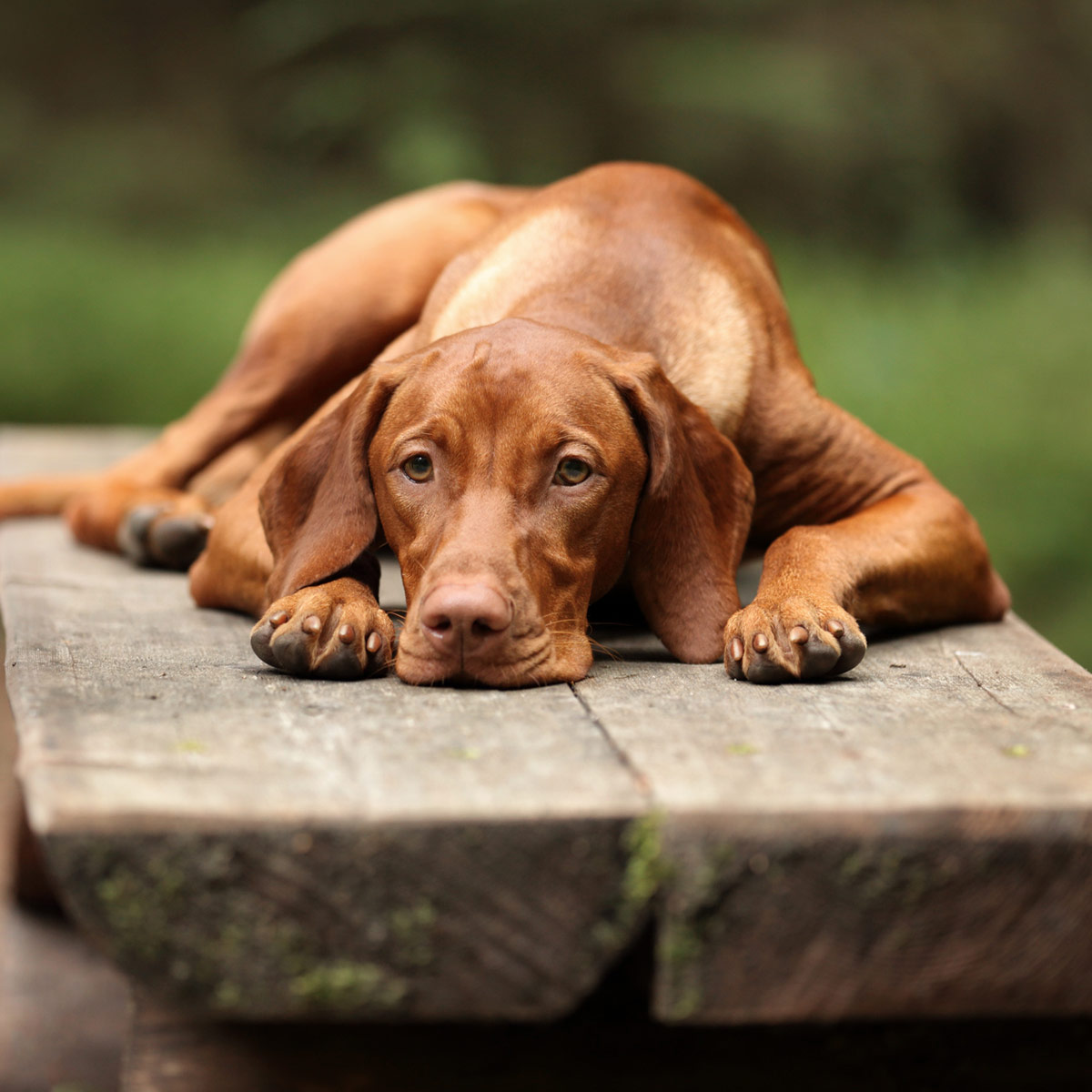 signs your pet is sick