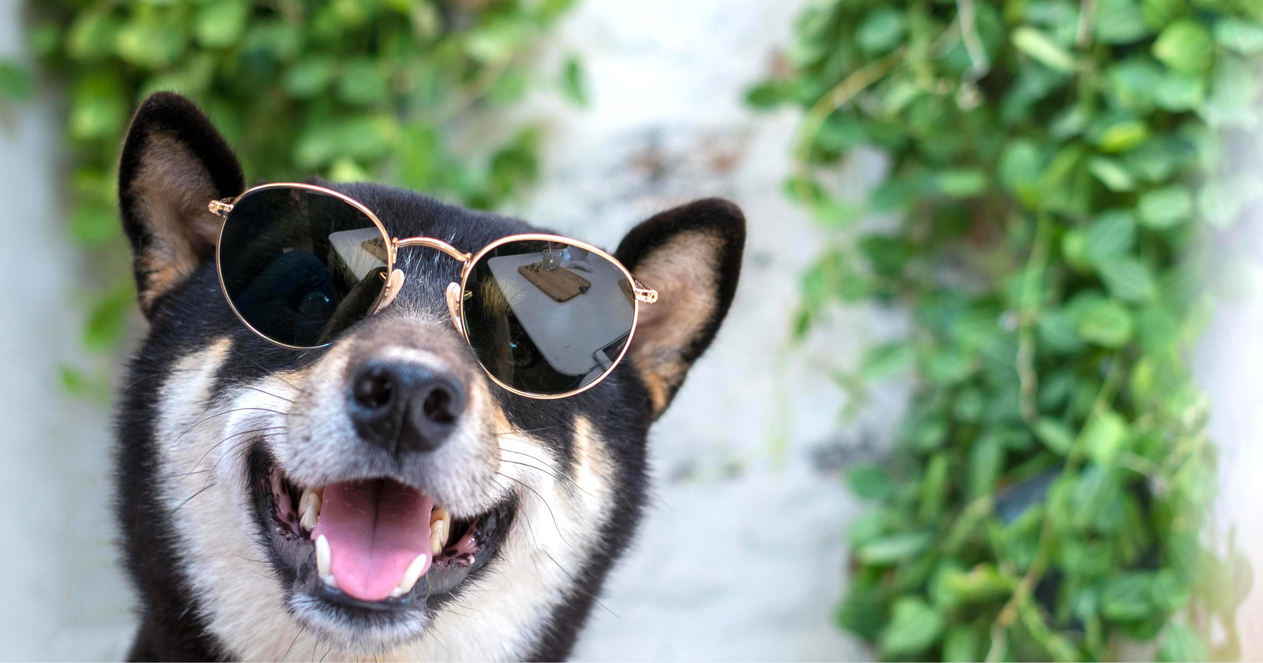 How to keep your pet cool when it's hot out | Life Lanes