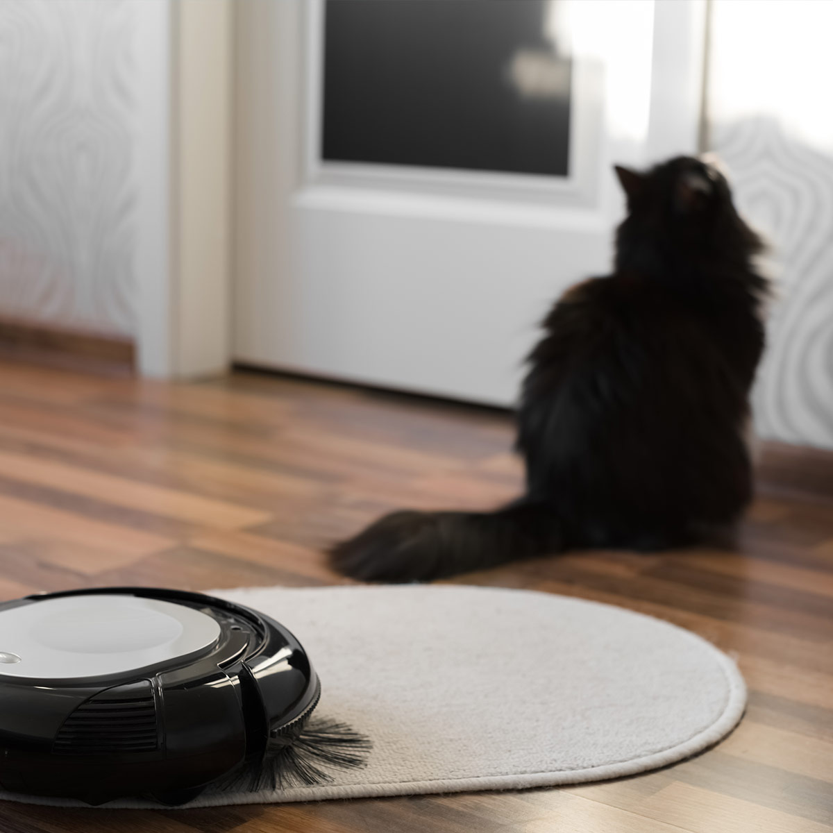cat with a roomba