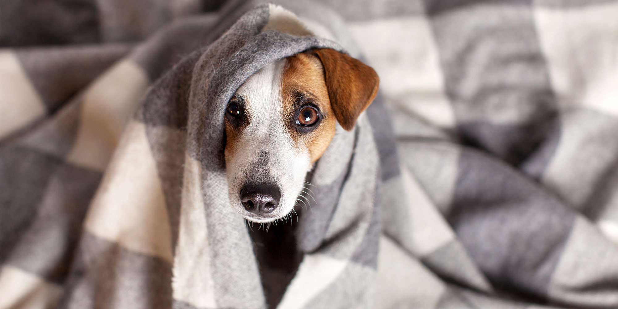 pets and severe weather