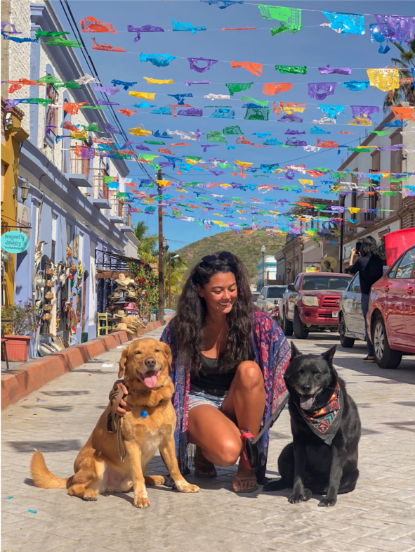 dogs in Mexico