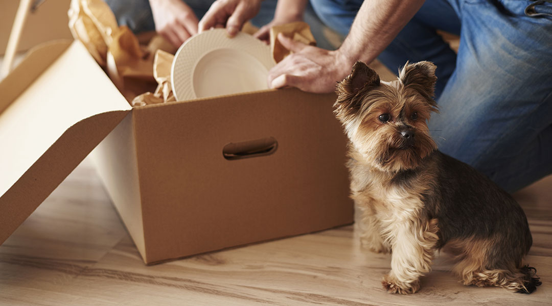 Tips for moving with a pet   Life Lanes by Progressive